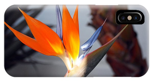 iPhone Case - Bird Of Paradise by Kelly Holm