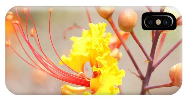 Bird Of Paradise Profile IPhone Case