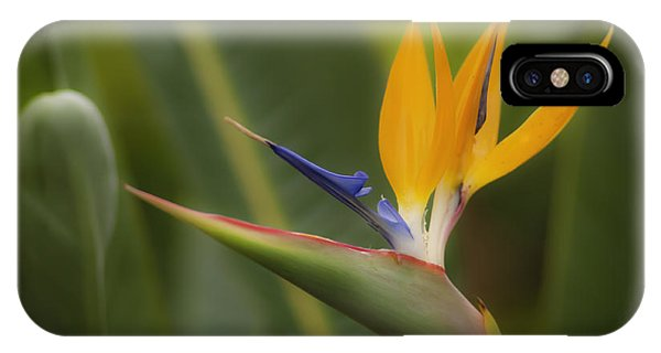 IPhone Case featuring the photograph Bird Of Paradise by Sherri Meyer