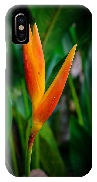 Bird Of Paradise Phone Case by William Reek