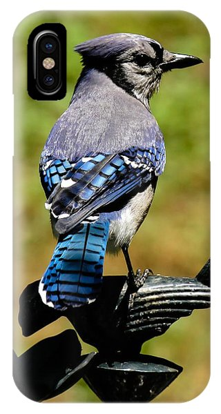 Bird On A Bird IPhone Case