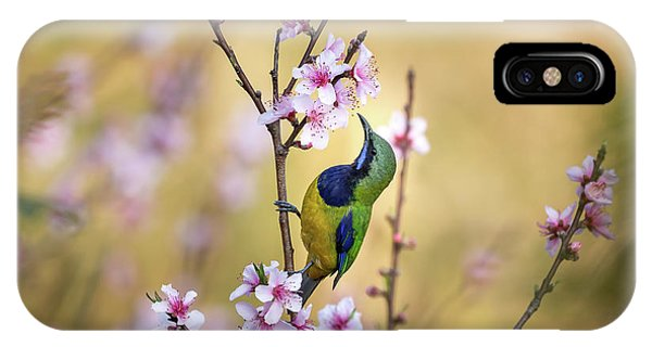 Peach iPhone Case - Bird Whispering To The Peach Flower by Jianfeng Wang