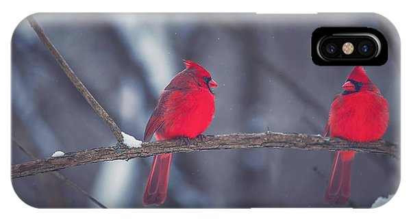Cardinal iPhone Case - Birds Of A Feather by Carrie Ann Grippo-Pike
