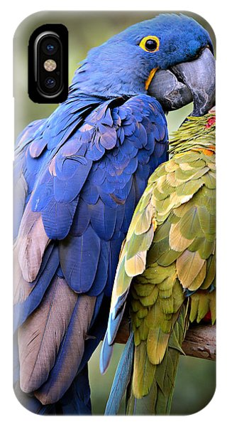Macaw iPhone Case - Birds Of A Feather by Stephen Stookey