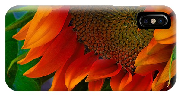 Birth Of A Sunflower IPhone Case