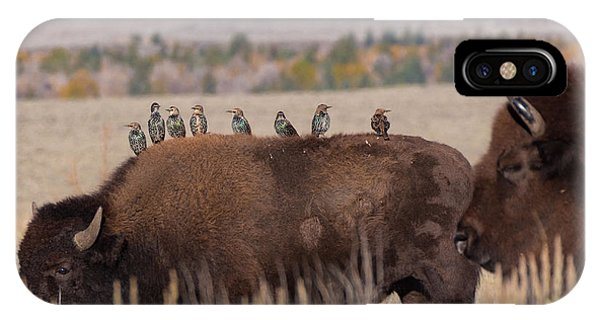 Bison And Buddies IPhone Case