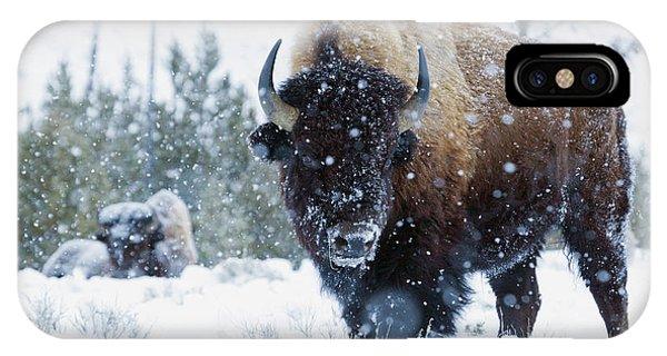 iPhone Case - Bison Bulls, Winter Landscape by Ken Archer