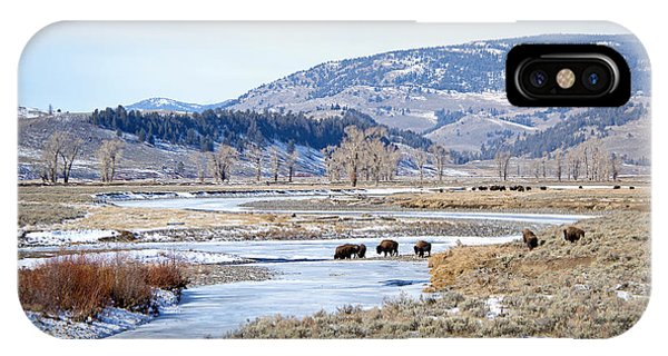Bison In Lamar Valley IPhone Case