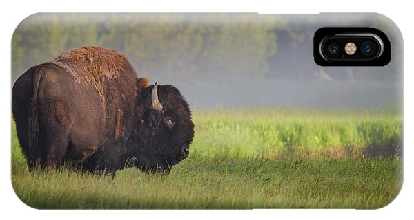 Bison In Morning Light IPhone Case