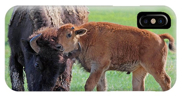 Bison With Young Calf IPhone Case