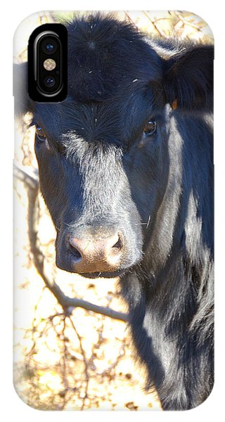 Blac Angus Heifer IPhone Case