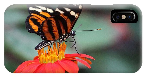 IPhone Case featuring the photograph Black And Brown Butterfly On A Red Flower by Jeremy Hayden