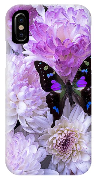 Fall Flowers iPhone Case - Black And Purple Butterfly On Mums by Garry Gay