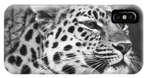 Black And White - Amur Leopard Portrait IPhone Case