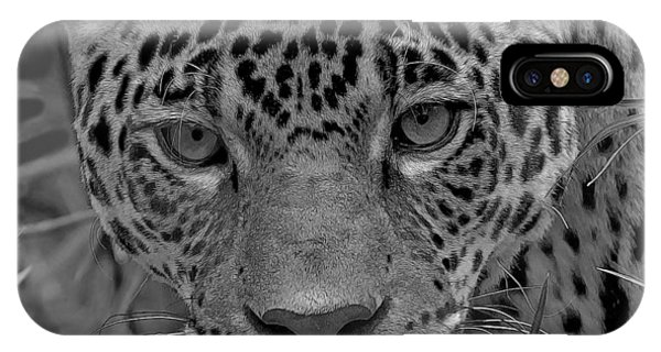 Black-and-white Jungle Cat IPhone Case