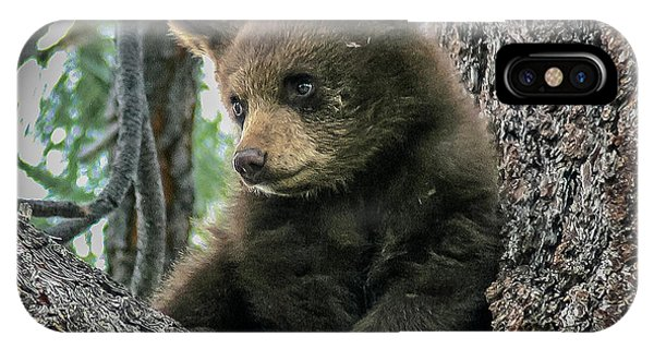 Black Bear Cub IPhone Case
