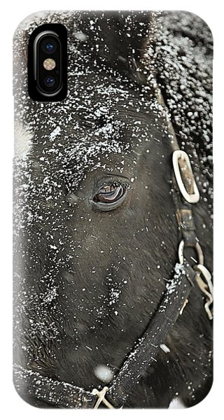 White Horse iPhone Case - Black Beauty In A Blizzard by Carrie Ann Grippo-Pike