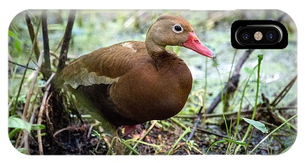 Black-bellied Whistling Duck 2 IPhone Case