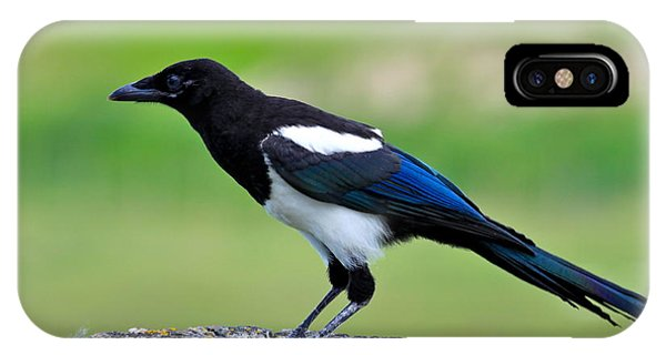 Black Billed Magpie IPhone Case