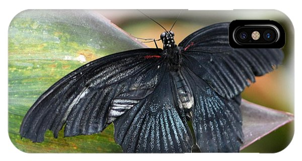 IPhone Case featuring the photograph Black Butterfly by Jeremy Hayden