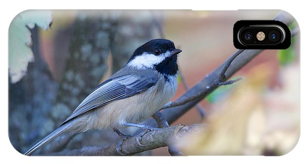 IPhone Case featuring the photograph Black-capped Chickadee by Nature and Wildlife Photography