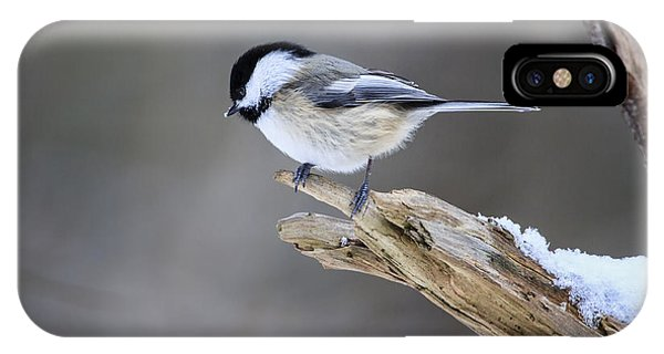 Black-capped Chickadee IPhone Case