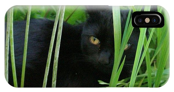 Black Cat In Long Grass IPhone Case