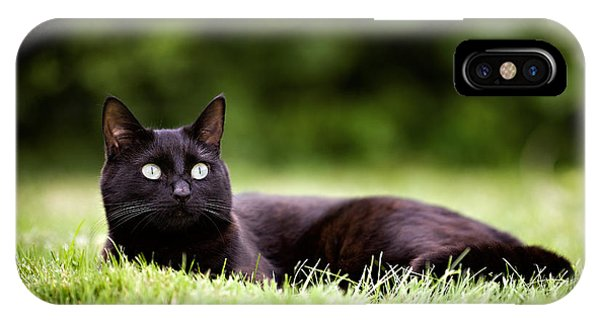 Black Cat Lying In Garden IPhone Case