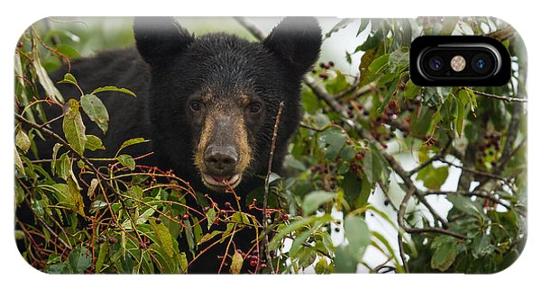 Bear In A Cherry Tree IPhone Case