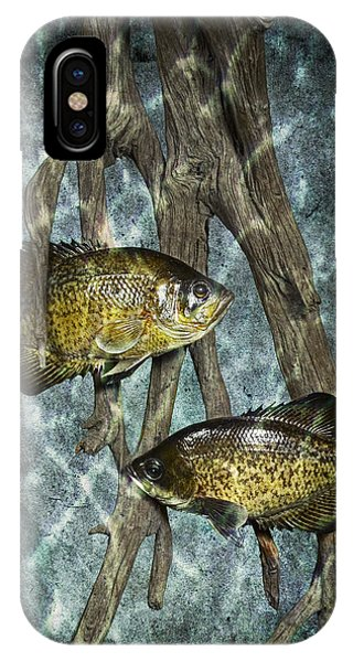 Black Crappies A Fish Image No 0143 Blue Version IPhone Case