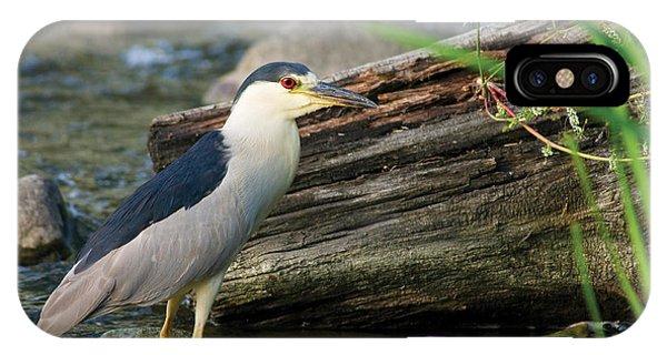 Black-crowned Night-heron IPhone Case