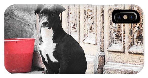 Black Dog Guarding A Vintage Wooden Door IPhone Case
