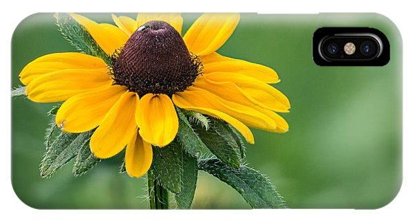 Black-eyed Susan IPhone Case