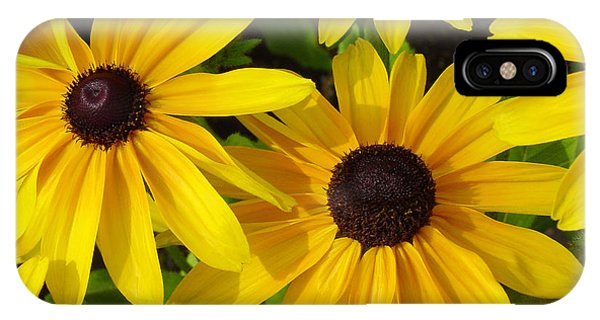 Horticulture iPhone Case - Black Eyed Susans by Suzanne Gaff