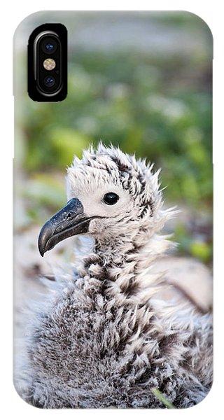 Albatross iPhone Case - Black-footed Albatross / Phoebastria by Daisy Gilardini