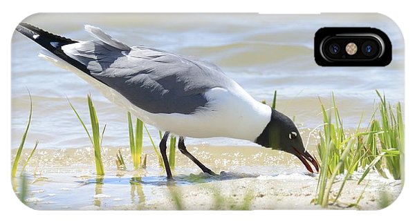 Black Headed Gull IPhone Case