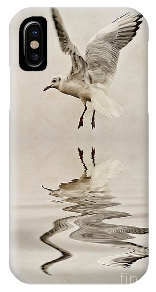 Black-headed Gull  IPhone Case