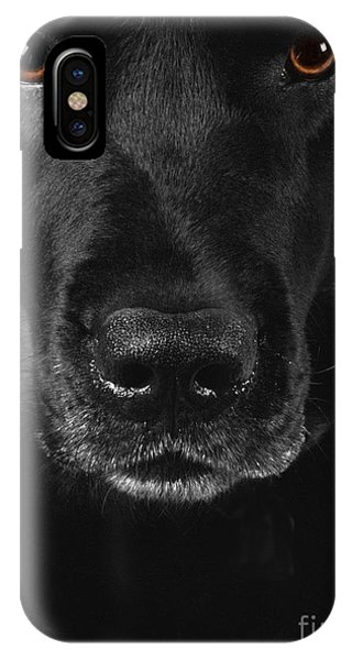 Black Labrador Retriever IPhone Case