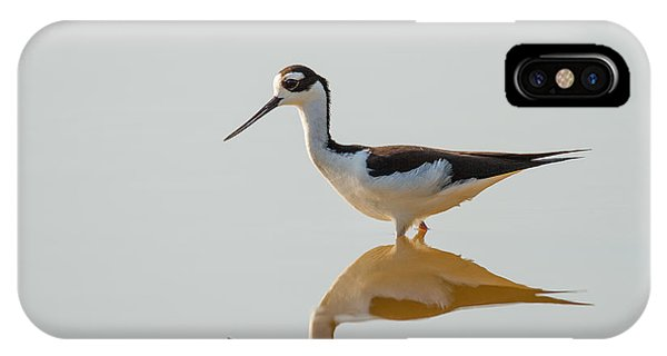 Black-necked Stilt IPhone Case