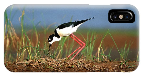 Migratory Birds iPhone Case - Black-necked Stilt (himantopus Mexicanus by Richard and Susan Day