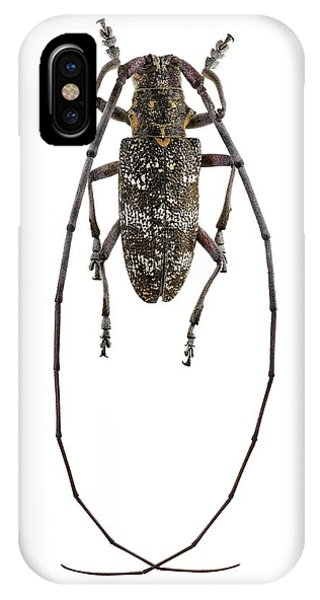 Black Pine Sawyer Beetle IPhone Case