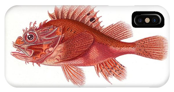 Ichthyology iPhone Case - Black Scorpionfish by Collection Abecasis