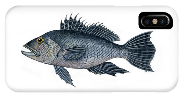 Black Sea Bass 3 IPhone Case