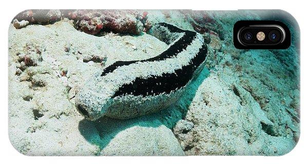 Sea Floor iPhone Case - Black Sea Cucumber by Georgette Douwma