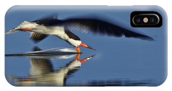 Black Skimmer  Mg_3882 IPhone Case
