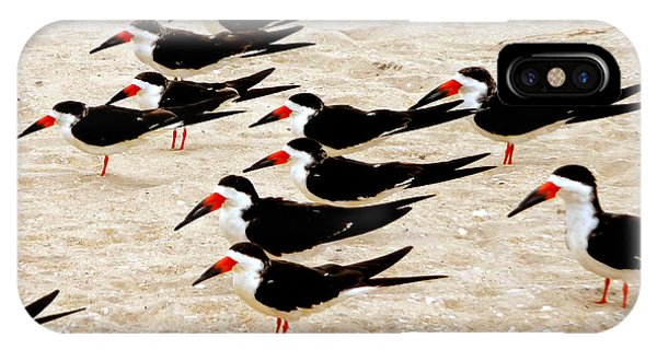 Black Skimmers On The Beach IPhone Case
