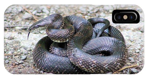 Black Snake IPhone Case