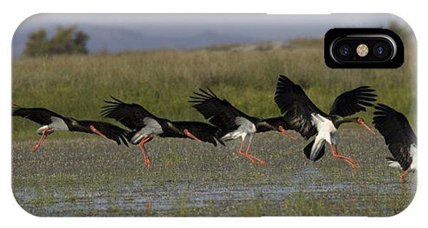 Black Stork Landing. IPhone Case