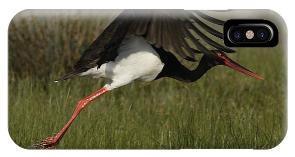 Black Stork Taking Off. IPhone Case