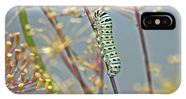Black Swallowtail Butterfly-to-be IPhone Case